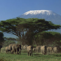 5-Day Amboseli-Tsavo West-Tsavo East