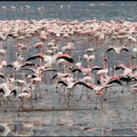 3-Day Lake Nakuru Experience